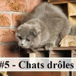 #5 – 10 photos de chats drôles