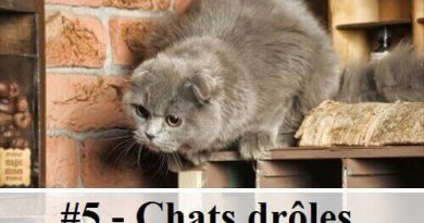1 10 photos de chats de richard saunders des hommes - Photo de chat rigolo ...