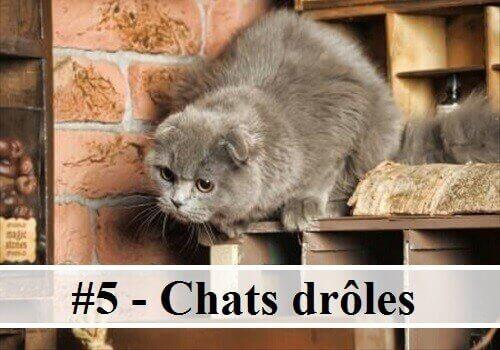 photo-de-chat-mignon-chat-drole-photo-animaux-photo-de-chaton-photo-mignonne-image-chaton-chat ...