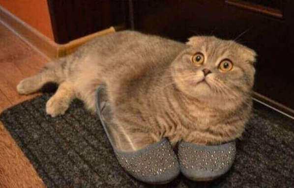 photo-de-chat-mignon-chat-drole-photo-animaux-photo-de-chaton-photo-mignonne-image-chaton-chat-rigolo-foto-de-chat-photo-de-chatons-petit-chat-mignon-chats-droles-photos-chatons