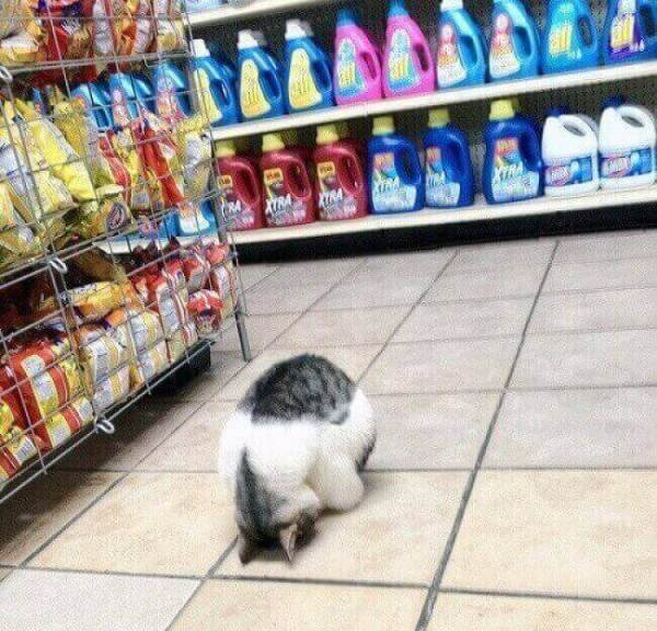 photo-de-chat-mignon-chat-drole-photo-animaux-photo-de-chaton-photo-mignonne-image-chaton-chat-rigolo-foto-de-chat-photo-de-chatons-petit-chat-mignon-photo-chaton-mignon-chats-droles