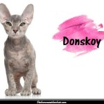 Le Donskoy