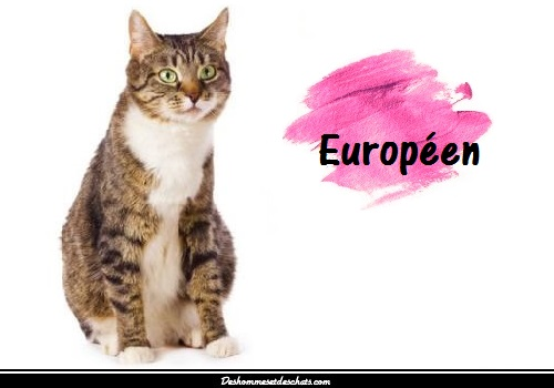 le chat europ en des hommes et des chats. Black Bedroom Furniture Sets. Home Design Ideas