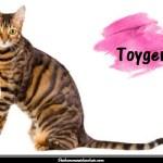 Le Toyger