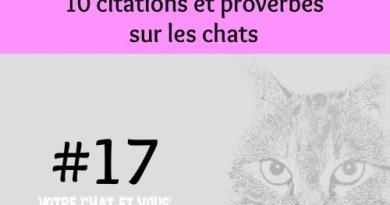 #17 – 10 citations et proverbes sur les chats