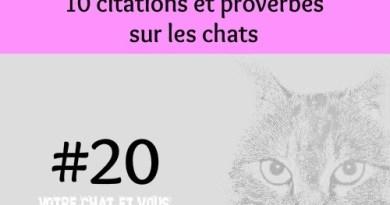 #20 – 10 citations et proverbes sur les chats