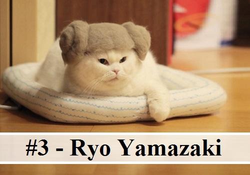 Photo de chat drole les photos des chats belle photo de chat chaton mignon photo hilarante image - Animaux humoristiques ...