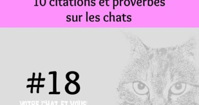 #18 – 10 citations et proverbes sur les chats