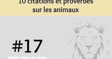 #17 – 10 citations et proverbes sur les animaux
