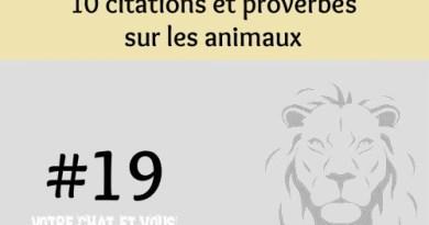 #19 – 10 citations et proverbes sur les animaux
