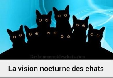 Comment voient les chats la nuit ?