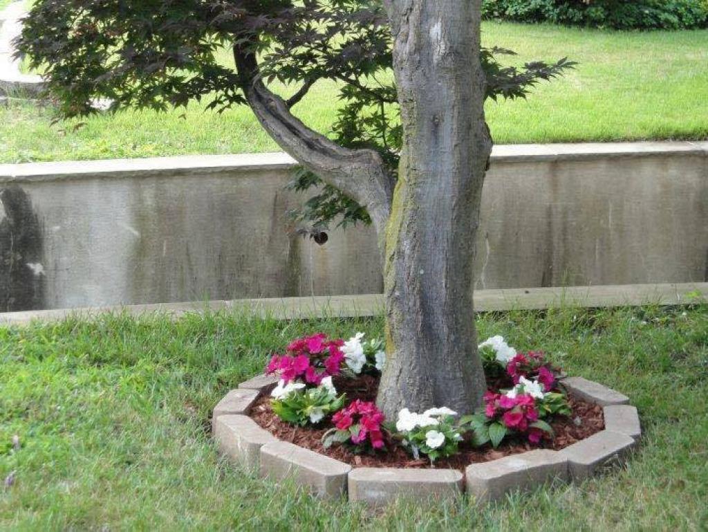 autour de votre arbre de jardin