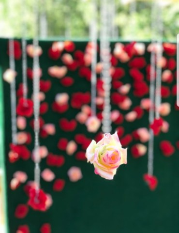 Rose Wedding Backdrop