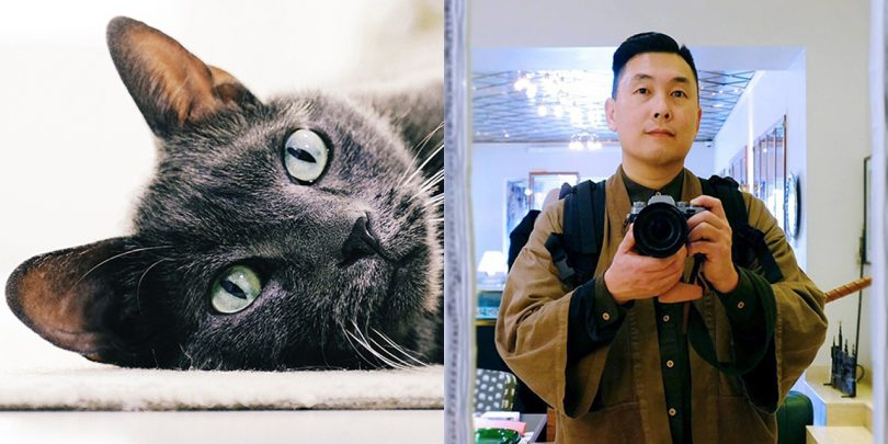 grey cat and man