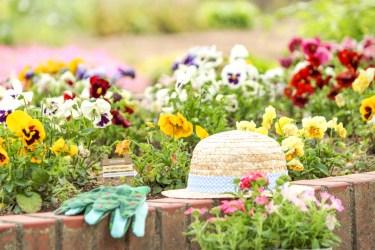 春の花壇の作り方や植えたい花や、初心者でも簡単人気の花を紹介