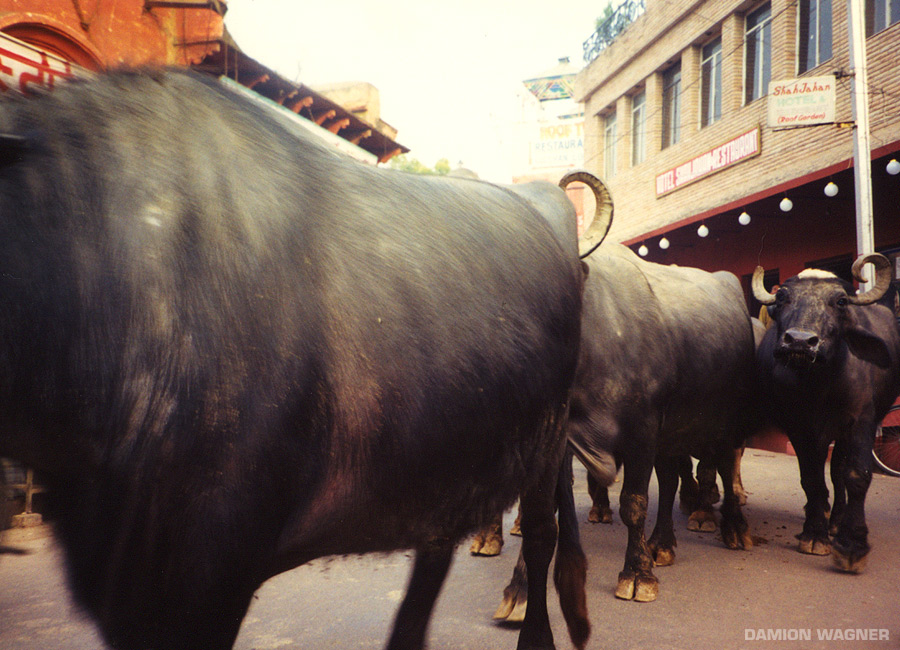 Bulls On Parade India
