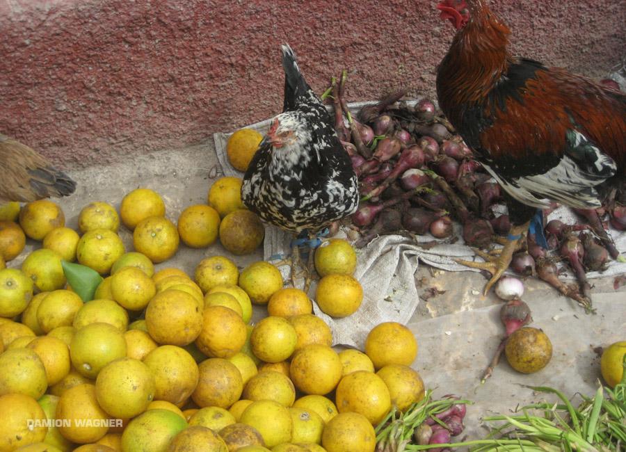 Chinkens & Lemons Guatemala