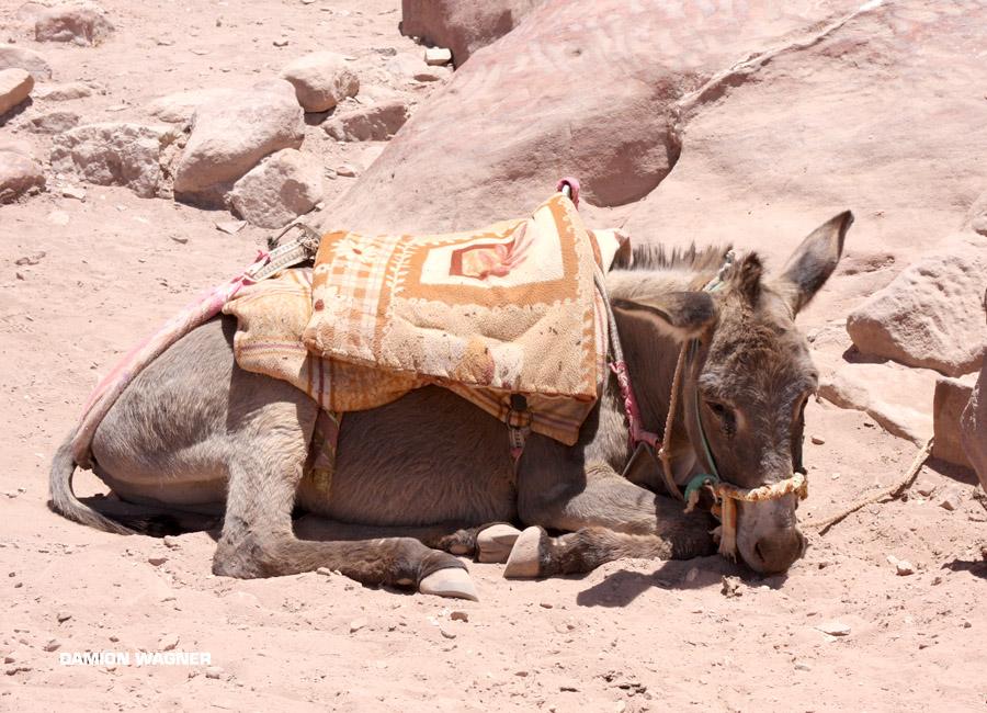 Tired Donkey Jordan