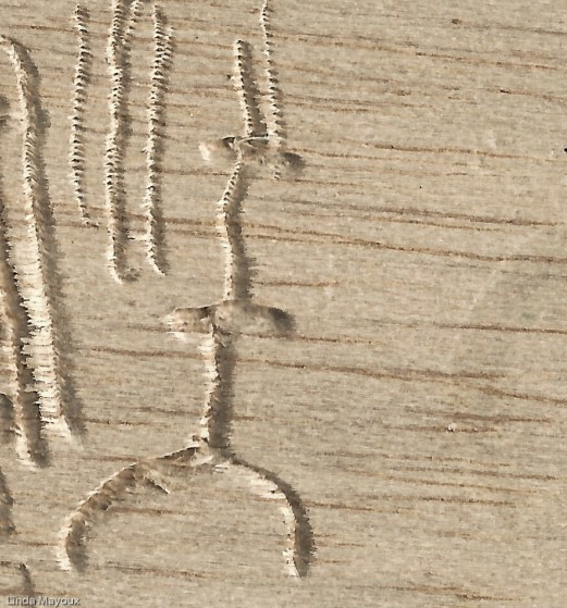Incised balsa wood