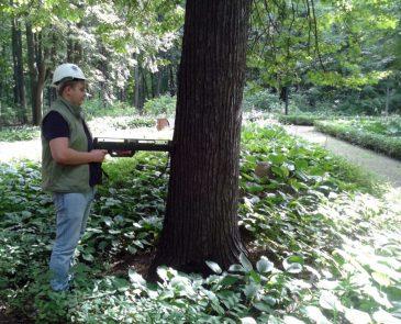 инструментальное обследование деревьев