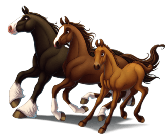 78 Horse Breeds