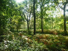 chirk-castle-woods-2