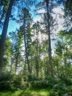 chirk-castle-woods-5