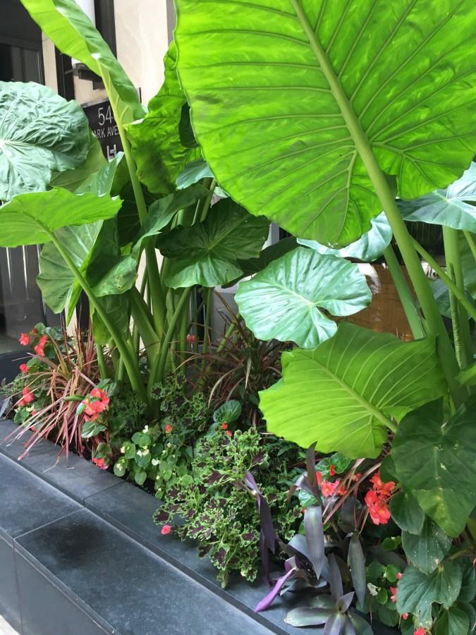 Tropical Sidewalk