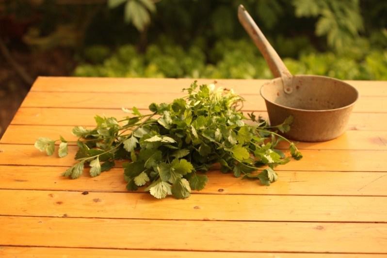 plant-flower-food-herb-produce-vegetable-1326652-pxhere.com.jpg