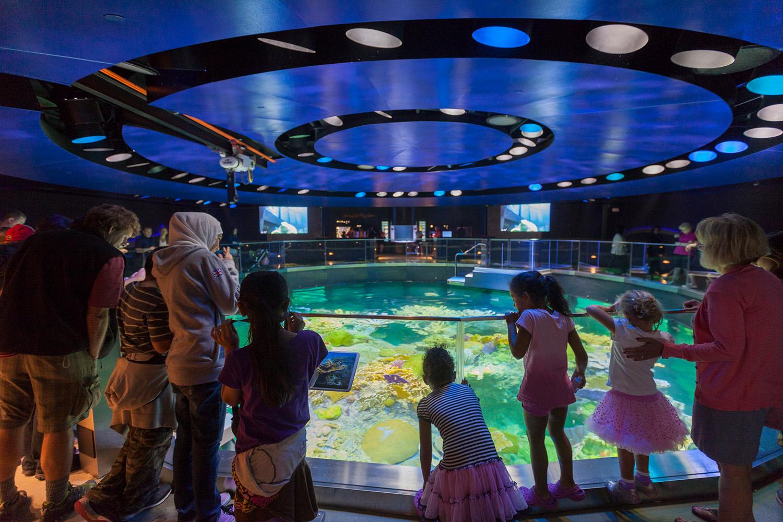 New England Aquarium Giant Ocean Tank Renovation BSA