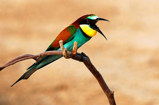 colorful bird photos