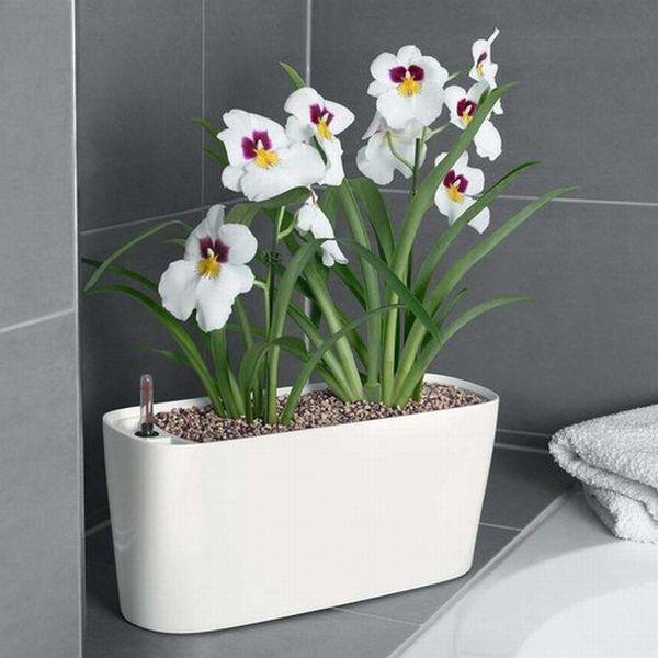 brookstone-self-watering-planter-2.jpg.492x0_q85_crop-smart