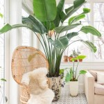 Indoor Plants A Complete Guide On The Best Indoor Plants For Each Room