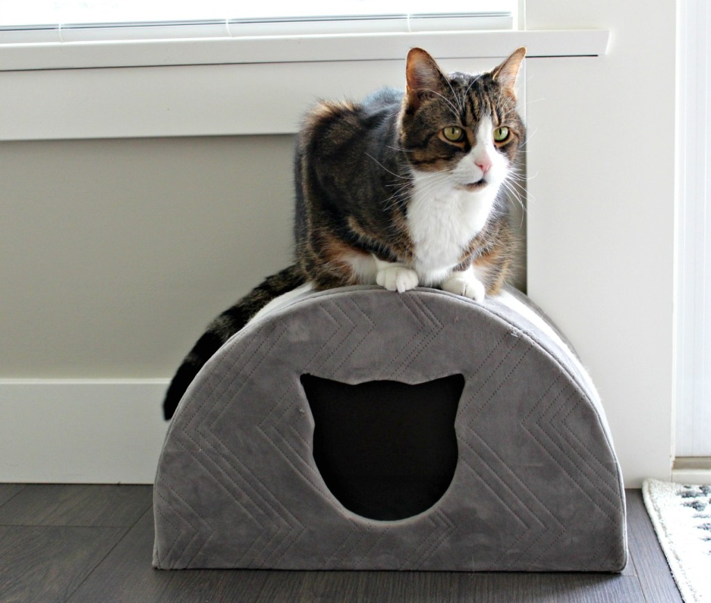 Angus the tabby|tabby cat| cat house| pet palace|#angusthetabby