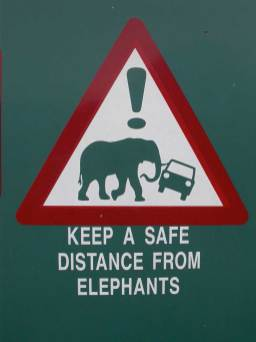 Keep a safe distance from elephants