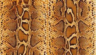Коллекция бесплатных текстур кожи змеи для дизайнеров