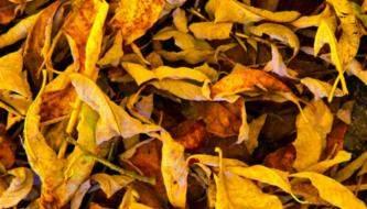 Подборка текстур высушенных листьев