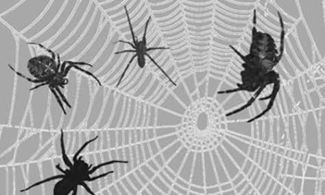 Набор кистей для пауков