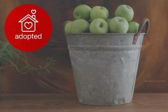 0004-VNT-vintage-metal-farmer-bucket-adopted