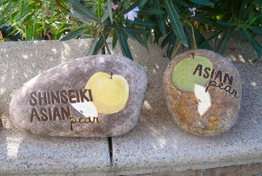 Shinseiki and Asian Pears