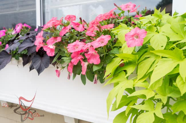 Window Boxes- Flower Boxes- How to add curb appeal-14