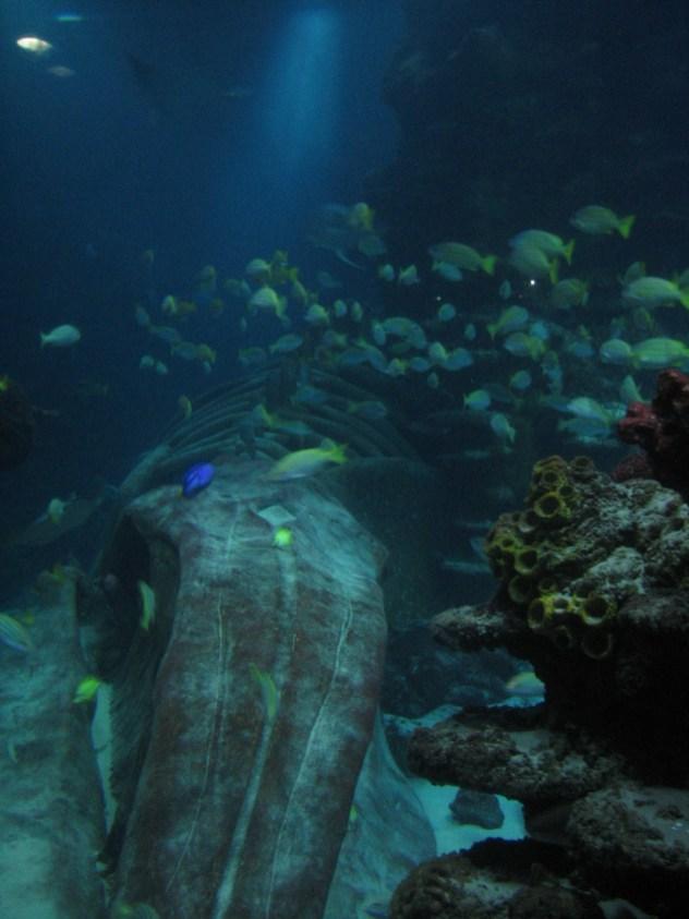 La Sea Life in Londra - De ce să eviţi atracţiile cu animale