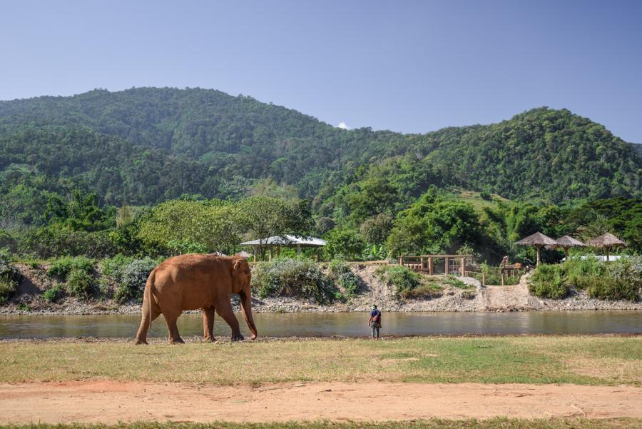 Elephant Nature Park, Chiang Mai, Thailanda