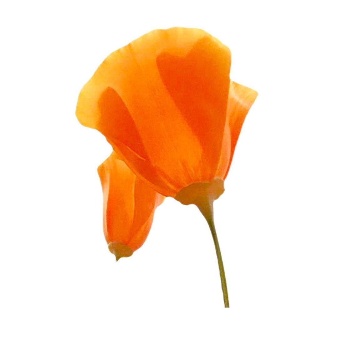 smaken en aroma's van Oranje wijn uit Nederland bloem aroma's