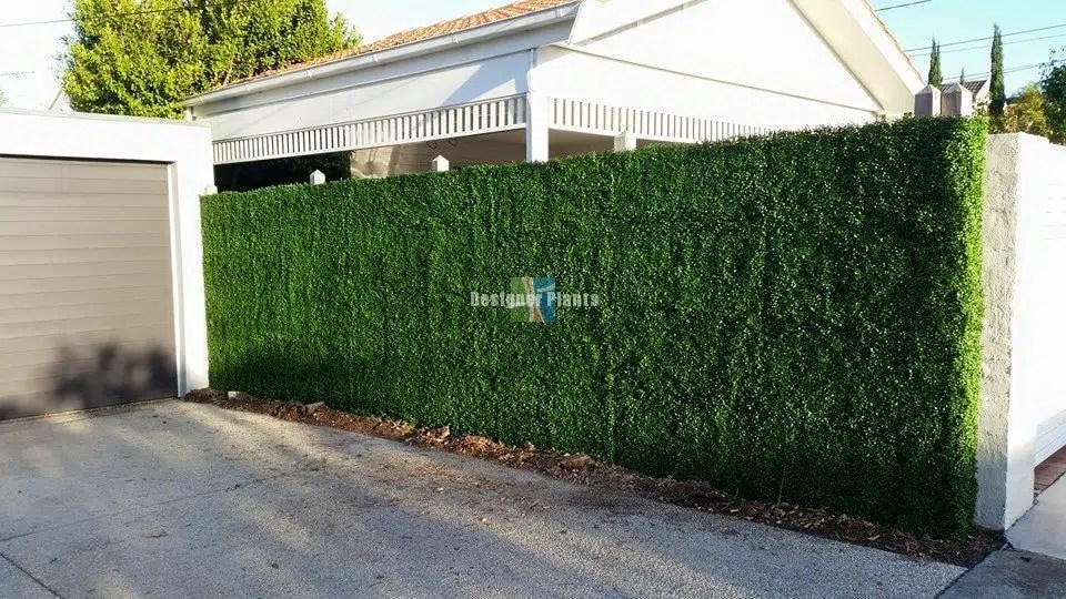 Before And After Artificial Hedges
