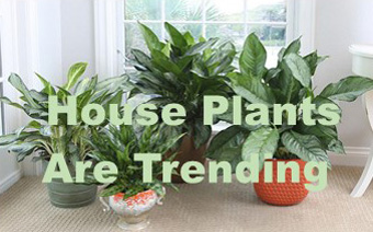 House plants are Trending