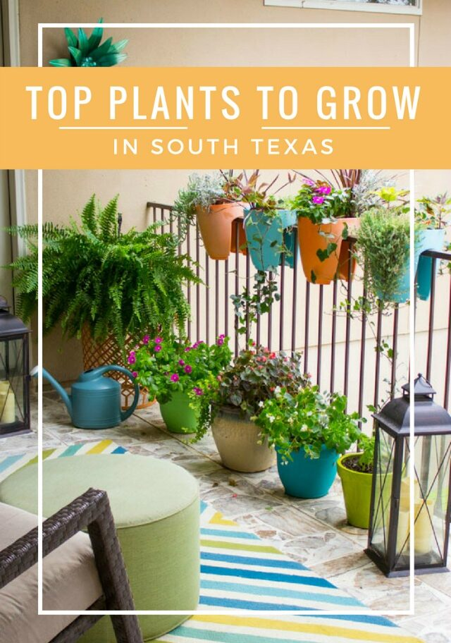 favorite plants to grow in south texas