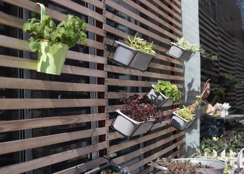 Hanging Plant Decor