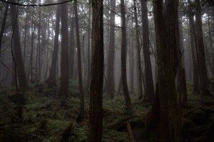 Aokigahara Forest Suicide Forest