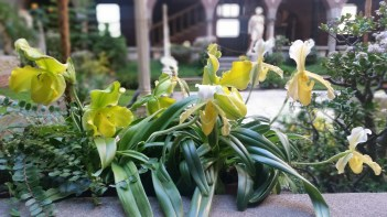 Yellow orchids with the courtyard in background